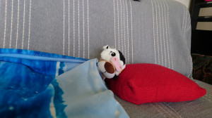 La sieste : l'activité préférée d'Edgard